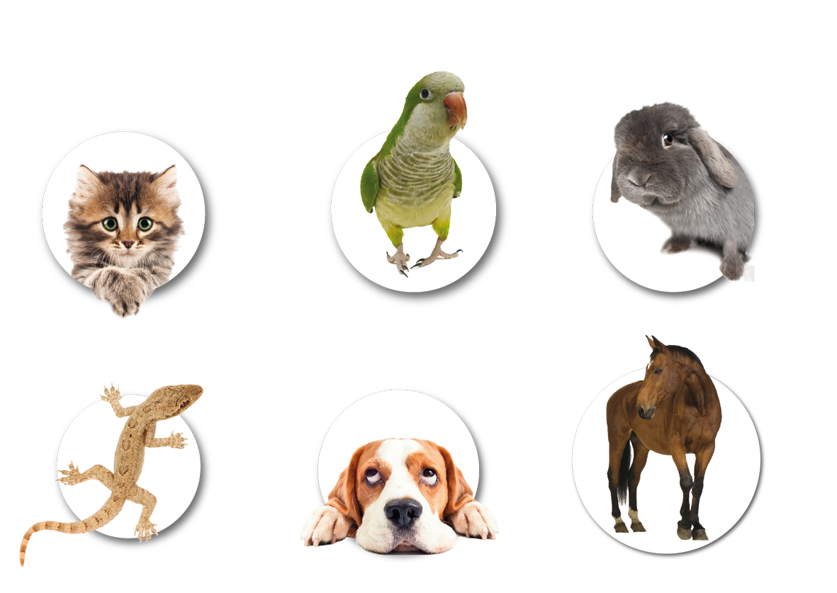 Banner ecopets